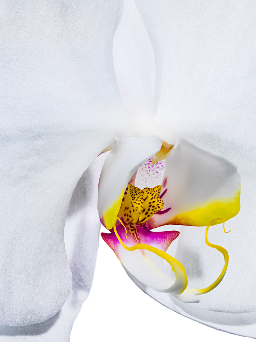 Los Angeles Photographer | Dana Hursey Photography | Botanicals | Orchid 3