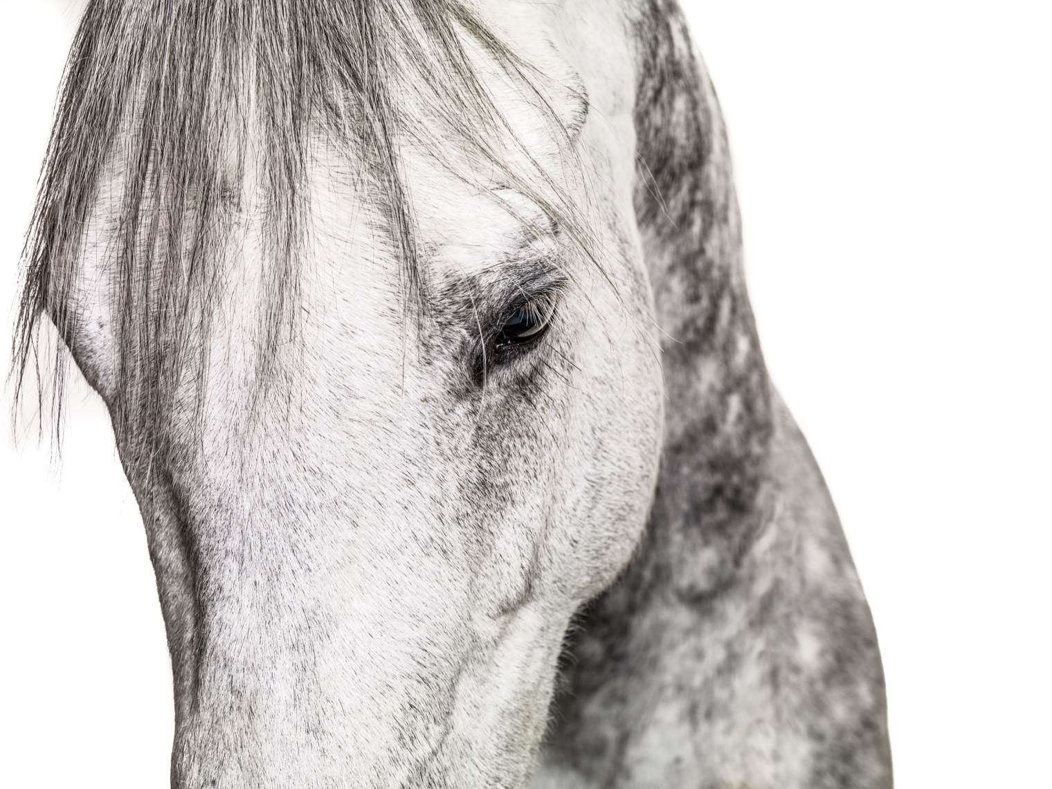 Los Angeles Photographer | Dana Hursey Photography | Photography on White | Horse Face