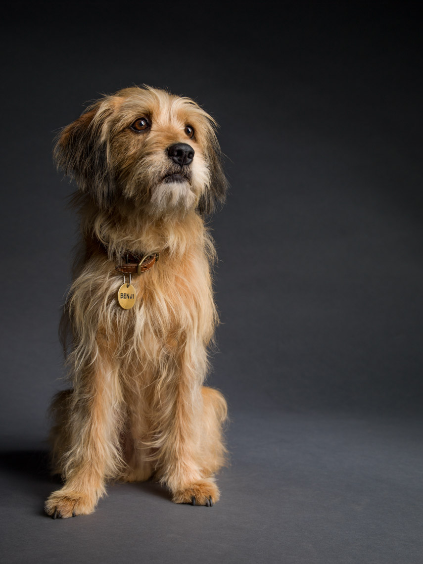 Los Angeles Photographer | Dana Hursey Photography | Animal Photography | Benji in Studio