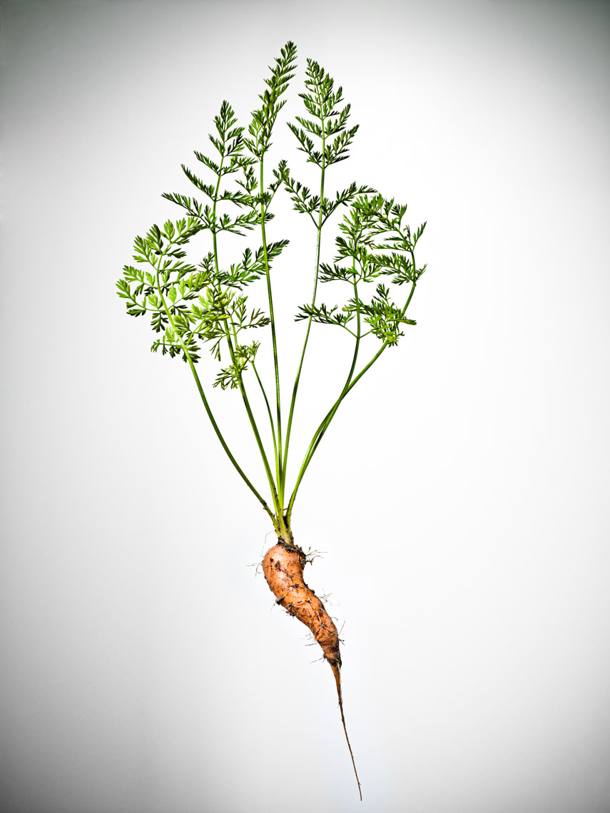 Los Angeles Photographer | Dana Hursey Photography | Food Photography | Carrot