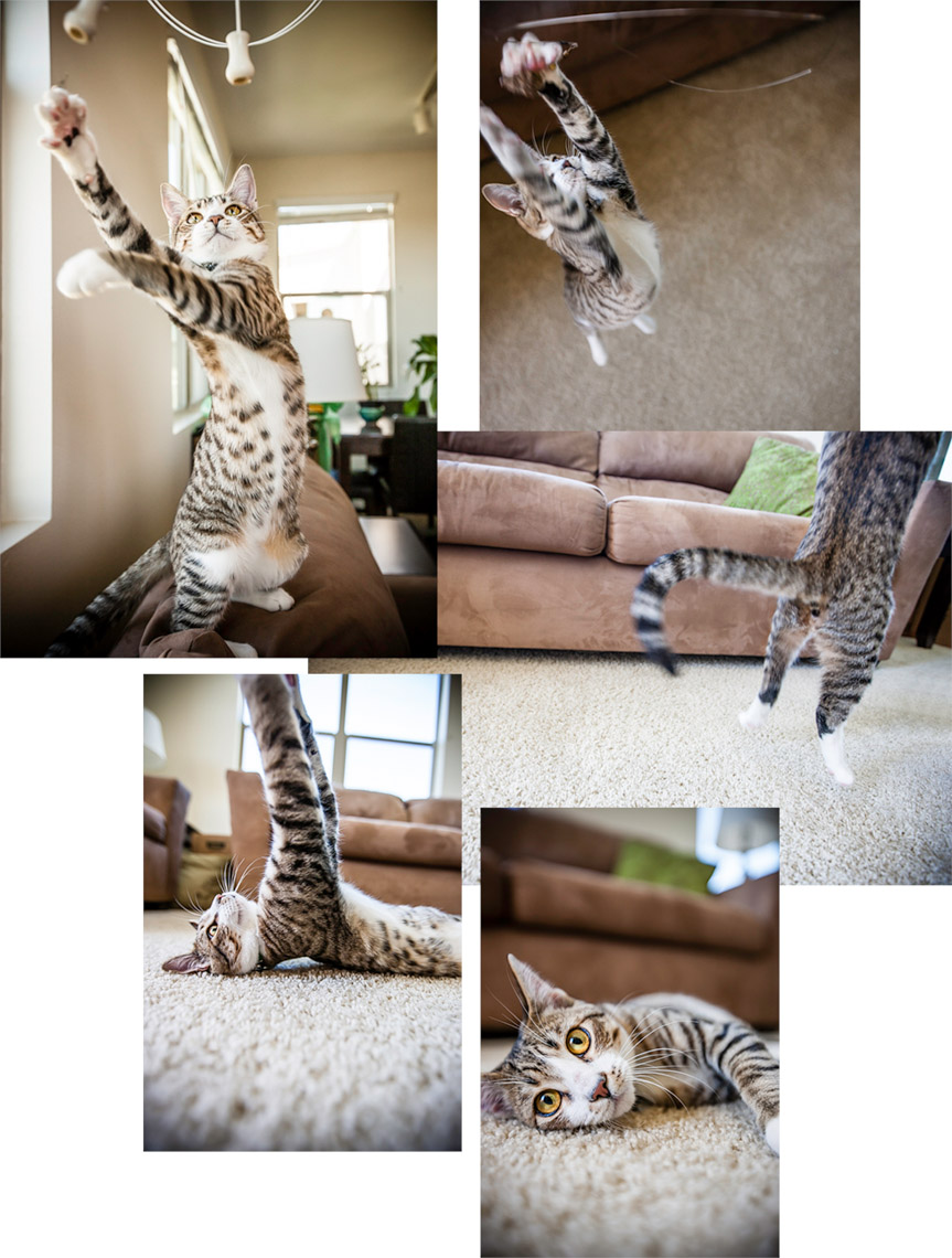 Los Angeles Photographer | Dana Hursey Photography | Animal Photography | CatMontage