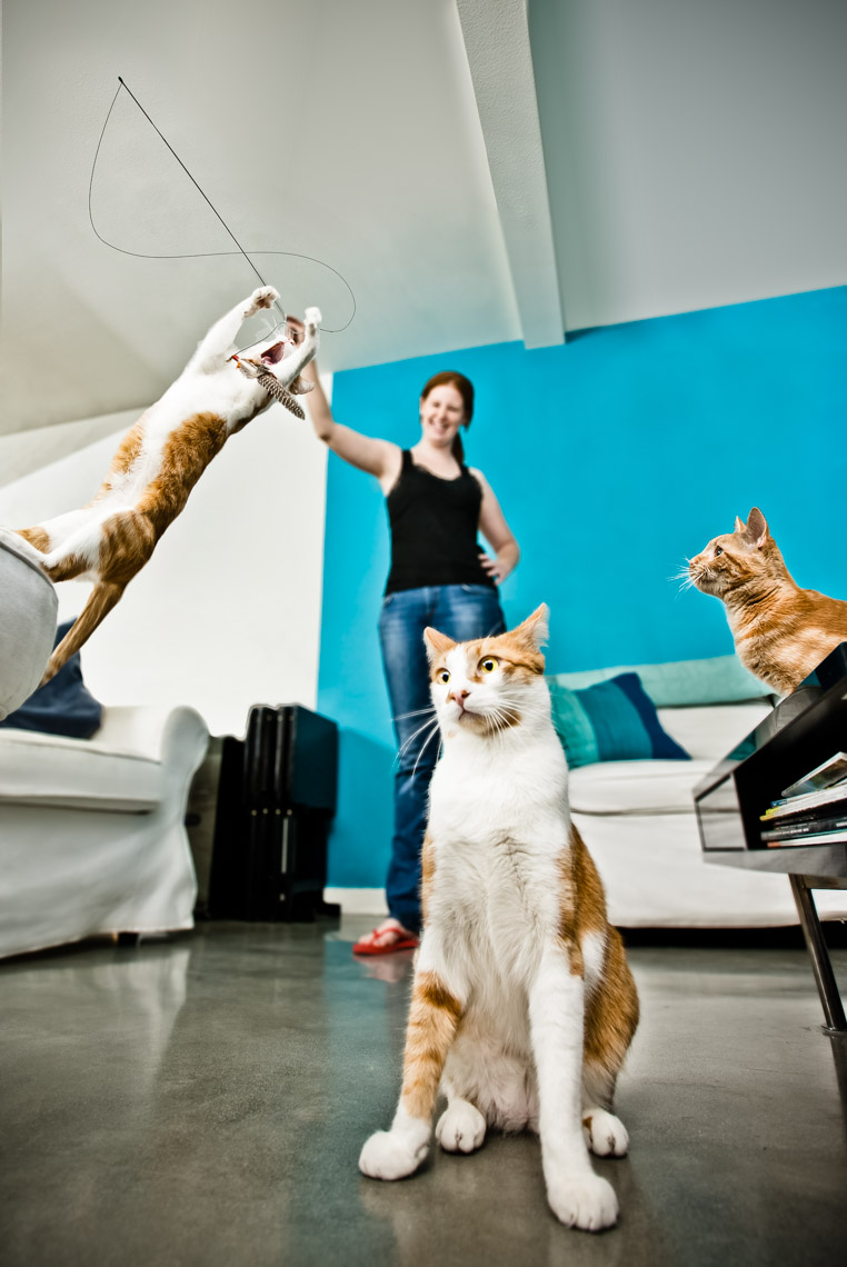 Los Angeles Photographer | Dana Hursey Photography | Animal Photography | Feline Frolicking