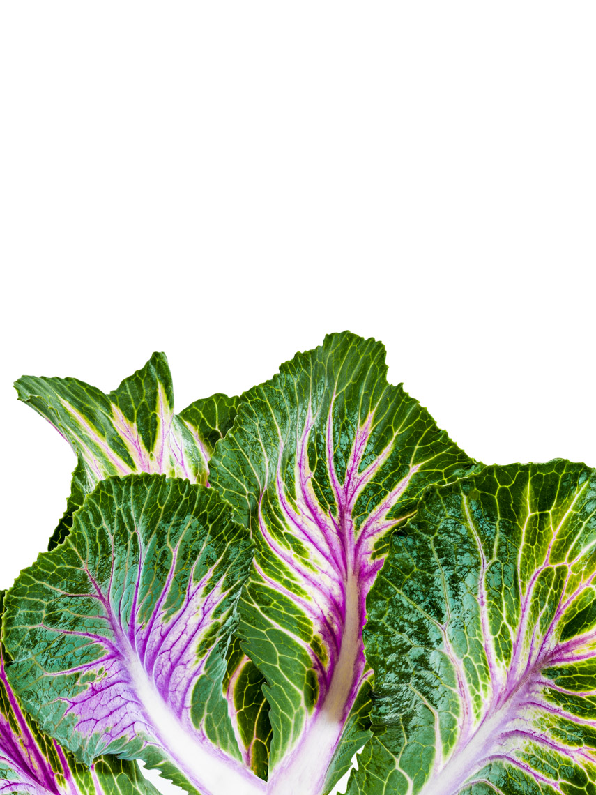 Los Angeles Photographer | Dana Hursey Photography | Botanicals | Kale 4