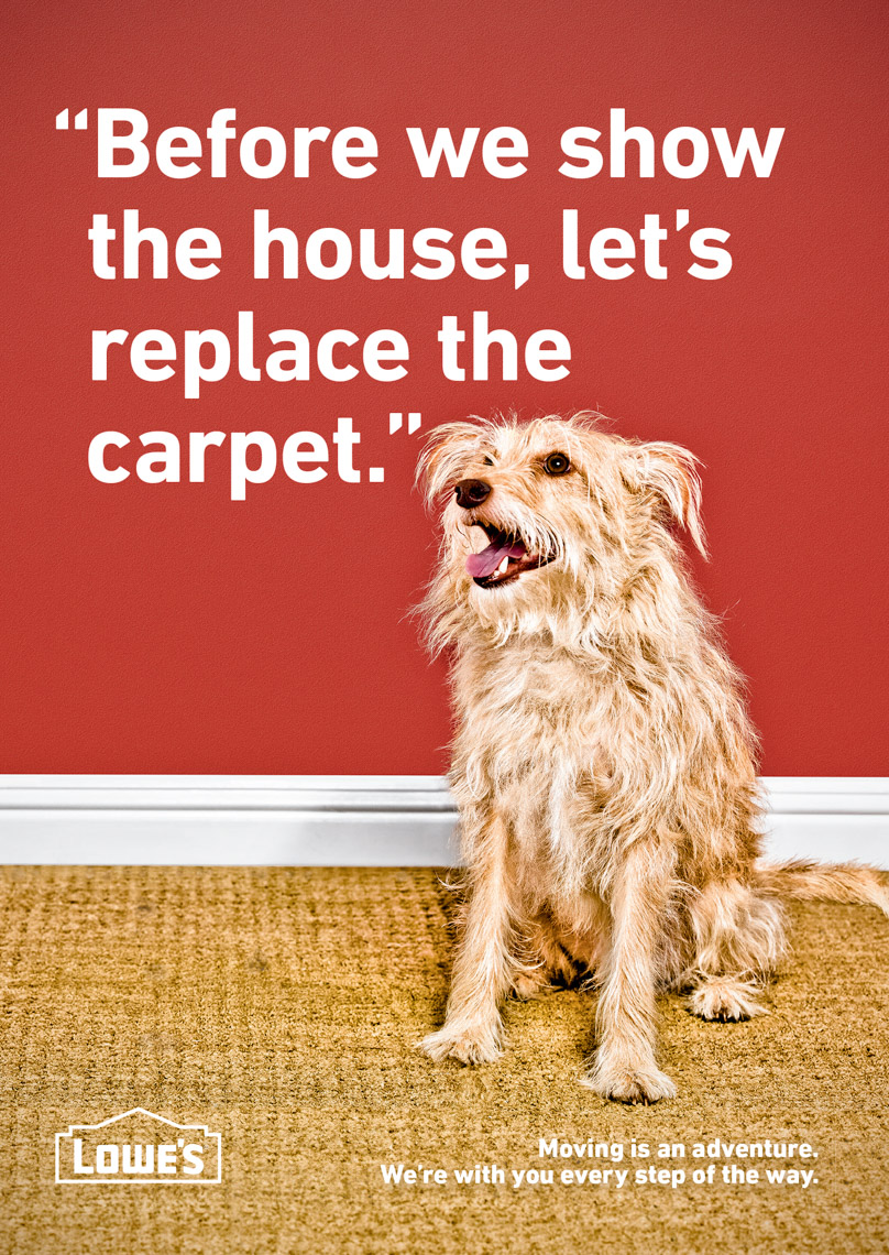 Los Angeles Photographer | Dana Hursey Photography | Animal Photography | Stinky Carpet